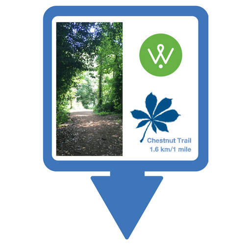 Chestnut Trail Walking Guide © Wellesley Woodlands